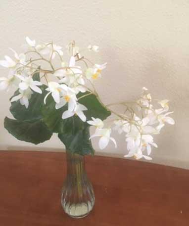 tampa garder flower design