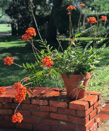 Tampa Garden Club Scholarship